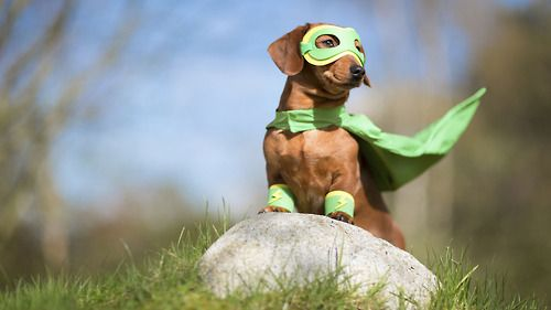 Super dogs and what they do – 8/3/15 @ 6:30pm (Grades K-5) Register